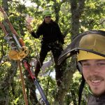 Cost of Conifer Tree Removal in Whiteley