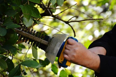 Waterlooville Hedge Trimming Service