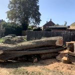 Find Tree Felling in Clanfield