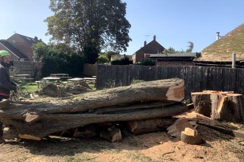 Local Denmead Conifer Tree Felling