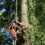 Denmead Conifer Tree Removal