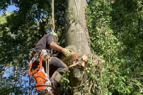 Local Denmead Conifer Tree Removal