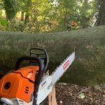 Conifer Tree Removal around Whiteley