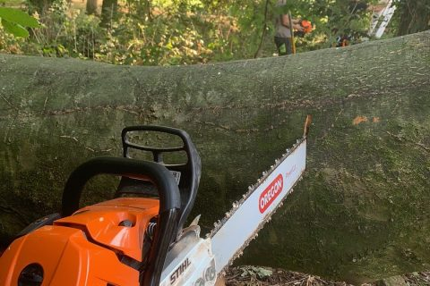 Tree Felling & Removal in Charlton