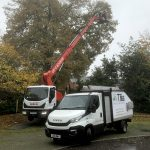 Whiteley Conifer Tree Removal Contractors