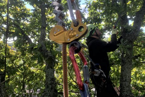 Hampshire Tree Thinning & Pruning