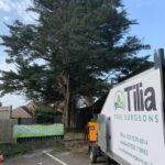 Conifer Tree Removal near me Denmead