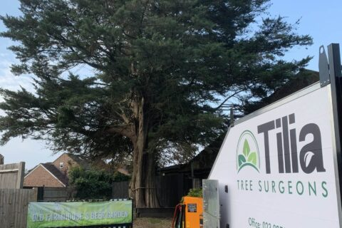 Tree Surgery Services in Cocking