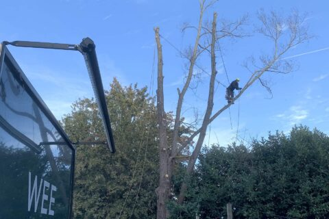Hampshire Commercial Tree Maintenance